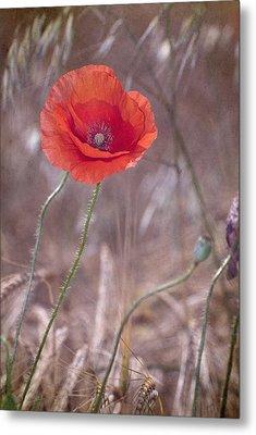 Last Poppy Metal Print by Guido Montanes Castillo