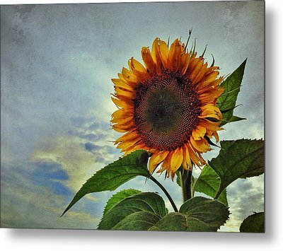 Late August Sun Metal Print by Jame Hayes