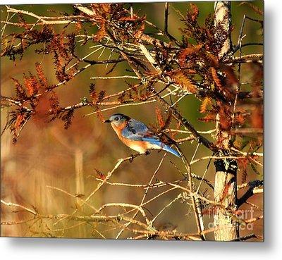 Late Fall Bluebird Metal Print