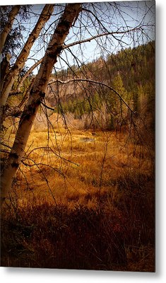 Late Fall Metal Print by Jerry Cahill