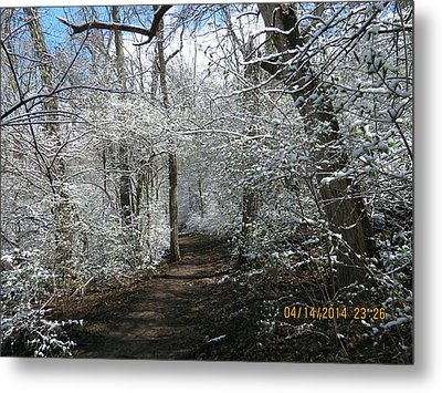 Metal Print featuring the photograph Late Season Snow Fall by Eric Switzer