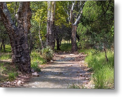 Metal Print featuring the photograph Late Summer Solitude by Beverly Parks