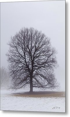 Late Winter Fog Metal Print