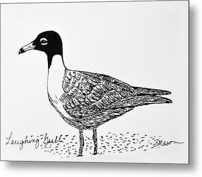 Laughing Gull Metal Print by Becky Mason