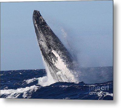 Launch Metal Print by Fred  Sheridan