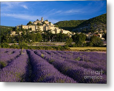 Lavender And Banon Metal Print by Brian Jannsen