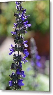 Lavender Dance - Floral Photography By Sharon Cummings Metal Print