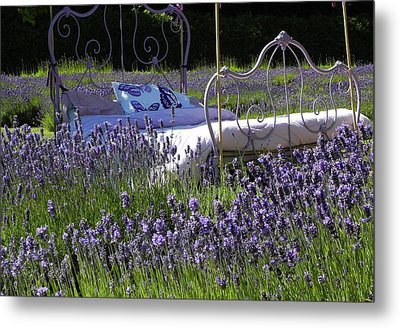 Metal Print featuring the photograph Lavender Dreams by Cheryl Hoyle