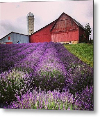 Lavender Farm Landscape Metal Print by Christy Beckwith
