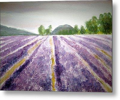 Lavender Fields Tasmania Metal Print by Elvira Ingram