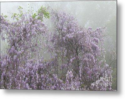 Lavender Fog Metal Print by Leslie Kirk