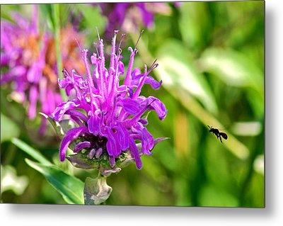 Metal Print featuring the photograph Lavender Pink Bee Balm Wild Bergamot by Karon Melillo DeVega