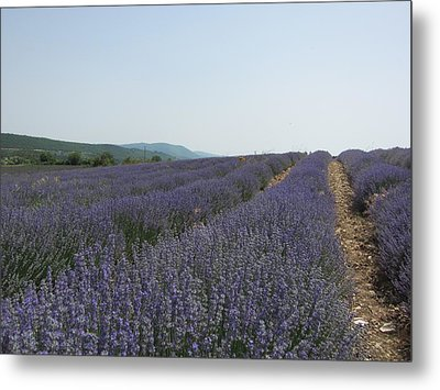 Metal Print featuring the photograph Lavender Sky by Pema Hou