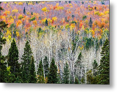 Layers Of Autumn Metal Print by Mary Amerman