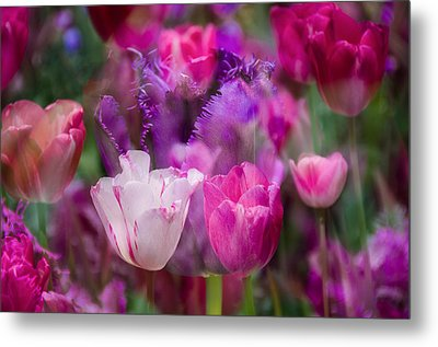 Layers Of Tulips Metal Print by Penny Lisowski