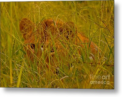 Metal Print featuring the photograph Laying In The Grass by J L Woody Wooden