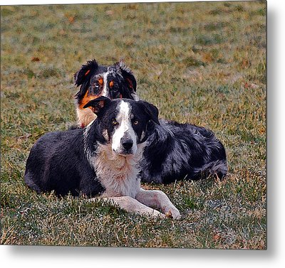 Lazy Canines Metal Print by Brian Graybill
