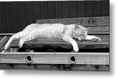 Metal Print featuring the photograph Lazy Cat by Andrea Anderegg