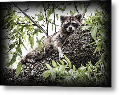 Lazy Day Metal Print