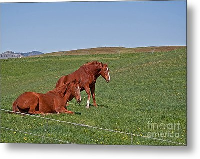 Metal Print featuring the photograph Lazy Horses by Valerie Garner