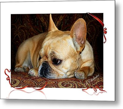 Metal Print featuring the photograph Lazy Paisley Afternoon by Barbara Chichester