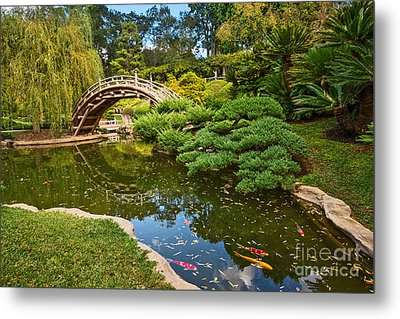 Lead The Way - The Beautiful Japanese Gardens At The Huntington Library With Koi Swimming. Metal Print by Jamie Pham