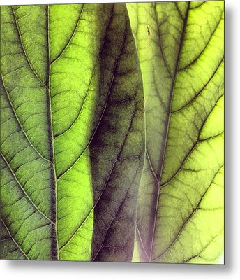 Leaf Abstract Metal Print by Christy Beckwith