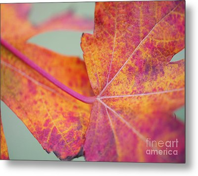 Leaf Abstract In Pink Metal Print by Irina Wardas