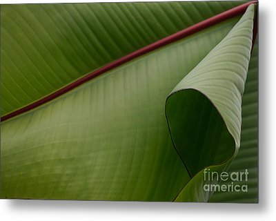 Leaf Abstract Metal Print