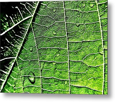 Leaf Abstract - Macro Photography Metal Print by Marianna Mills