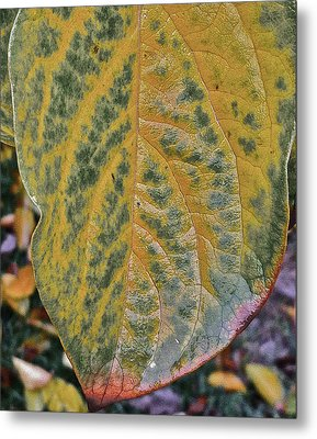 Metal Print featuring the photograph Leaf After Rain by Bill Owen