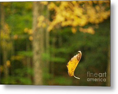 Leaf Aloft Metal Print