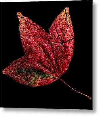 Leaf And Tree Metal Print by Jon Woodhams