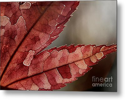 Metal Print featuring the photograph Leaf Detail by Kenny Glotfelty