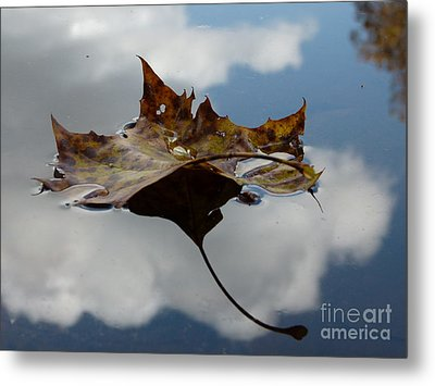 Leaf In Sky Metal Print