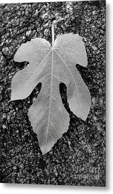 Leaf On Bark Metal Print by Andrew Brooks