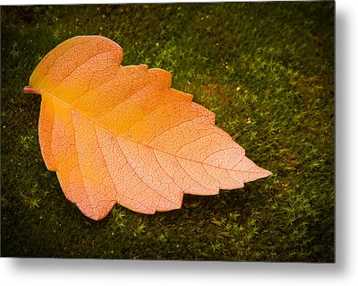 Leaf On Moss Metal Print by Adam Romanowicz