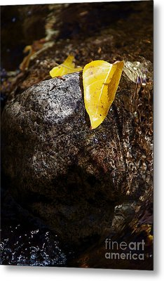Leaf On Rock Metal Print by ELITE IMAGE photography By Chad McDermott