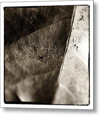 Leaf Patterns Metal Print by John Rizzuto