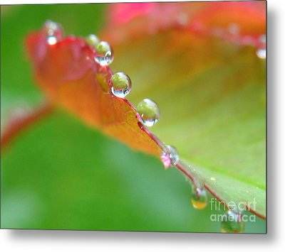 Leaf Pearls Metal Print by Patti Whitten