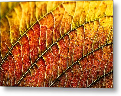 Leaf Rainbow Metal Print