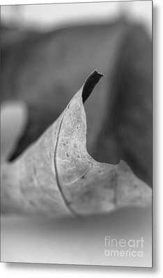 Leaf Study 2 Metal Print by Edward Fielding