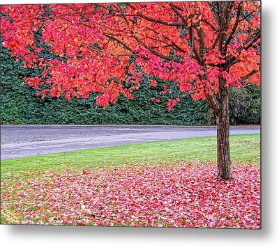 Metal Print featuring the photograph Leaf With Me by Wendy McKennon