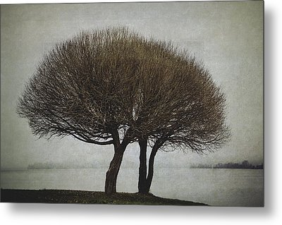 Metal Print featuring the photograph Leafless Couple by Ari Salmela
