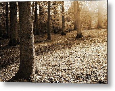 Leafy Autumn Woodland In Sepia Metal Print by Natalie Kinnear