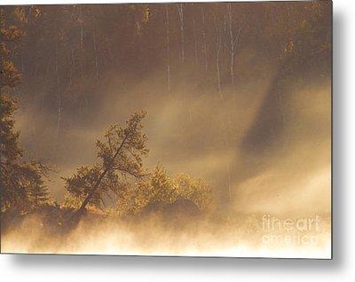 Leaning Tree In Swirling Fog Metal Print by Larry Ricker
