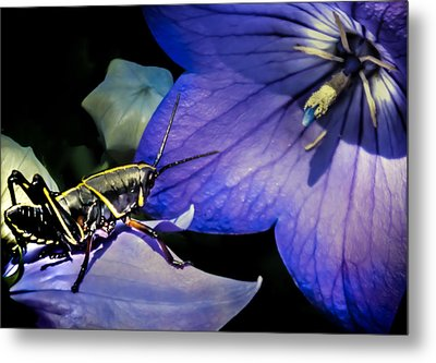 Contemplation Of A Pistil Metal Print by Karen Wiles