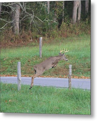 Leaping Buck In Smoky Mountains Metal Print by Dan Sproul