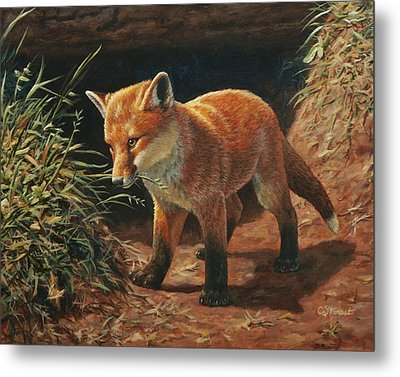 Red Fox Pup - Learning Metal Print by Crista Forest