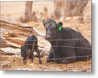 Learning To Stand On Your Own Metal Print by Shirley Heier